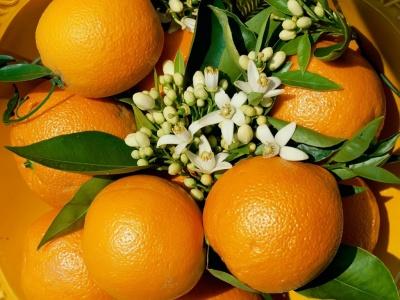 5 nuevos usos para las naranjas