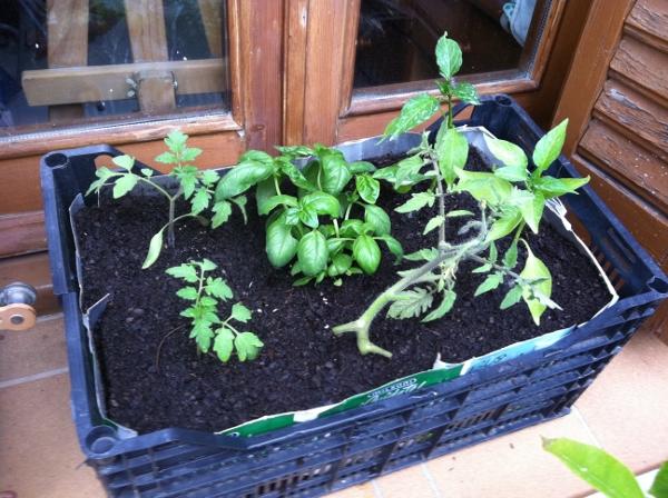 Como cultivar con macetas y no morir en el intento (Segunda parte)
