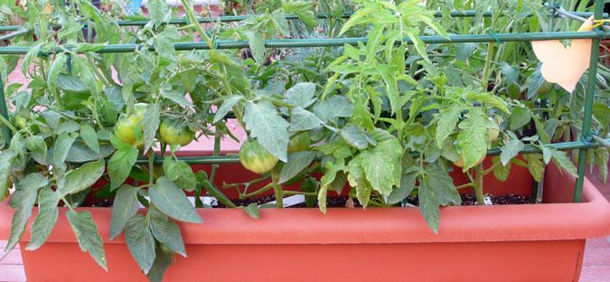 Como cultivar con macetas y no morir en el intento (Primera parte)