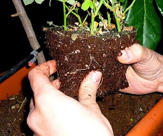 Cultiva un huerto y vive mas años