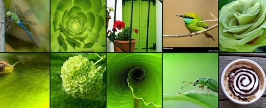 Diez acciones diarias para un estilo de vida más verde